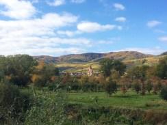 Die Weinterrassen in der Wachau sind im Herbst in leuchtendes Gelb getaucht