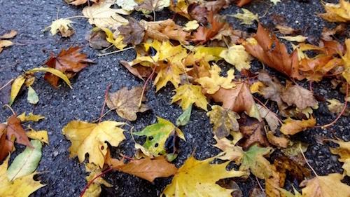 Farbenfrohes Herbstlaub