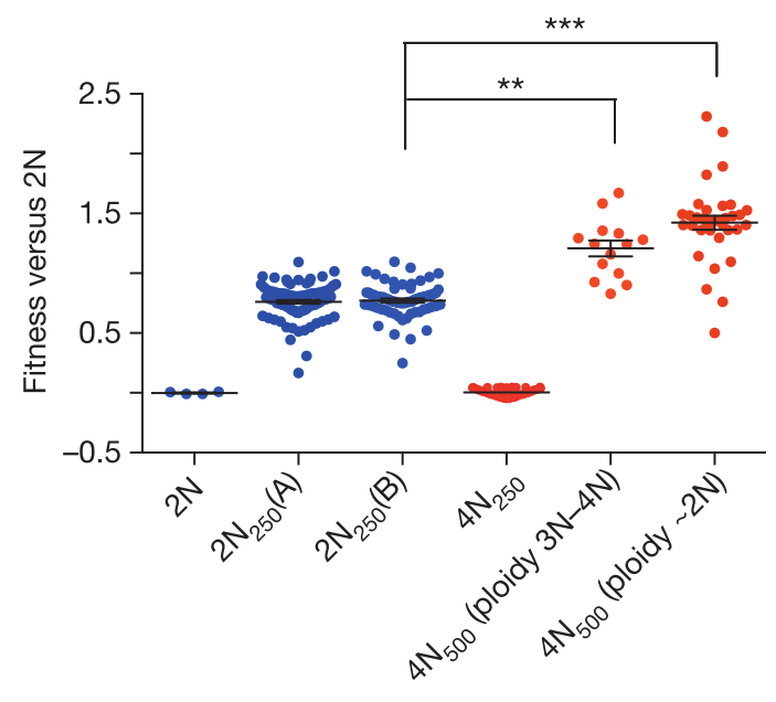 My Take On The Recent Polyploidy Can Drive Faster Adaptation In Yeast Study Kogiasimus