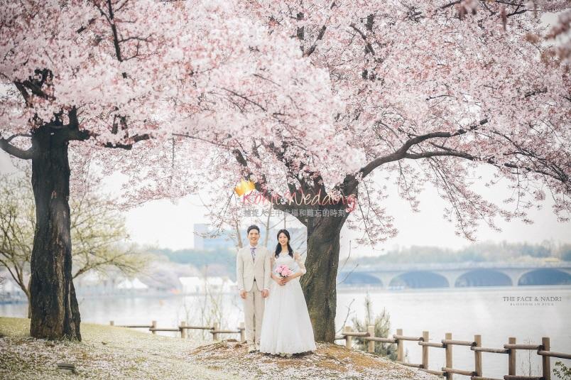 Korea Cherry Blossom The face studio