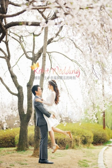 Korea Pre Wedding Cherry blossom Kohit Wedding 10