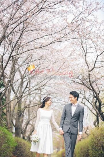 Korea Pre Wedding Cherry blossom Kohit Wedding 6