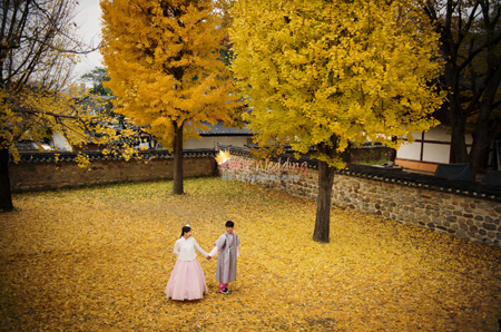 Korea fall leaves