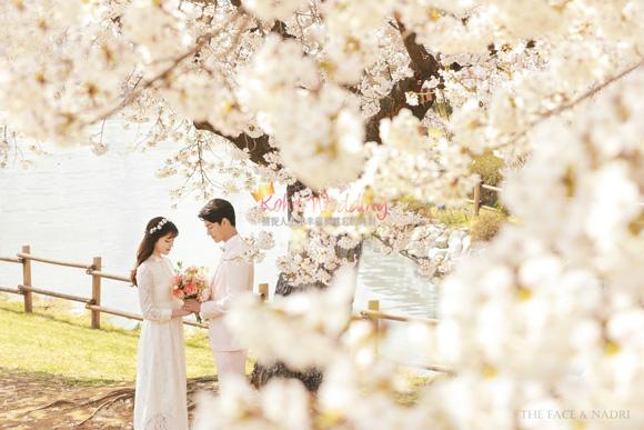 kohit-wedding-korea-pre-wedding-cherry-blossom-13