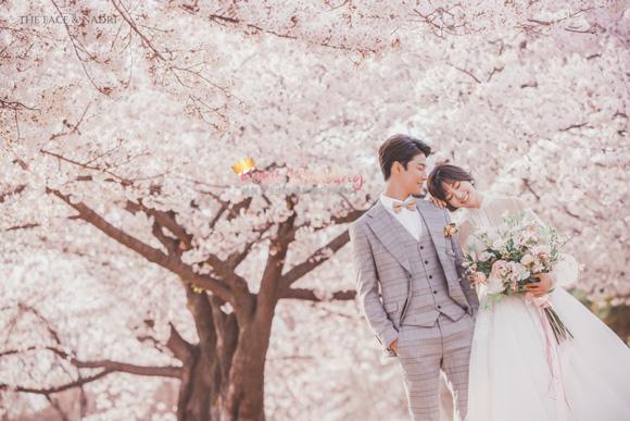 kohit-wedding-korea-pre-wedding-cherry-blossom-16