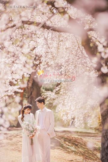 kohit-wedding-korea-pre-wedding-cherry-blossom-20