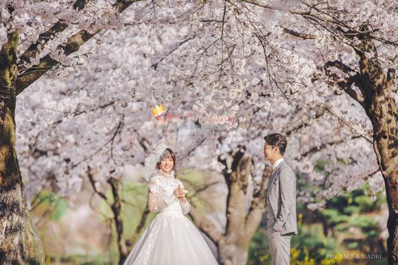 kohit-wedding-korea-pre-wedding-cherry-blossom-24