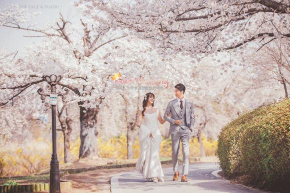 kohit-wedding-korea-pre-wedding-cherry-blossom-26