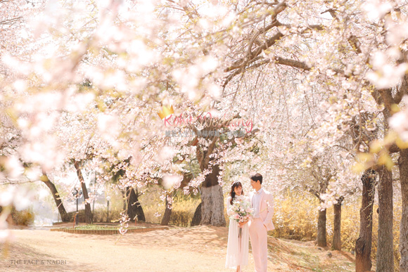 kohit-wedding-korea-pre-wedding-cherry-blossom-5