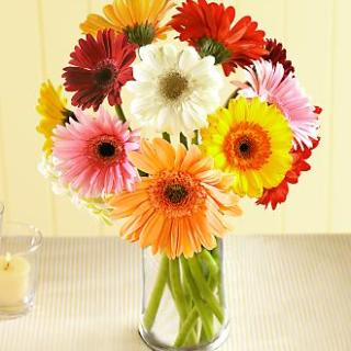 D is for Daisies- a New found Love!!