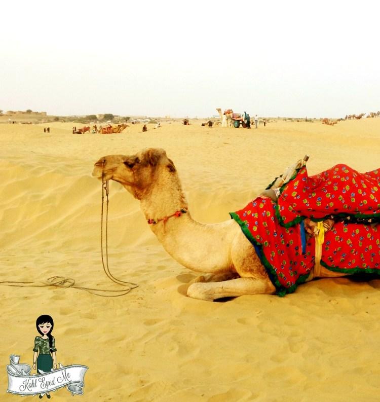 Jaisalmer Camel Safari- Sand Dunes Images - Camel Ride
