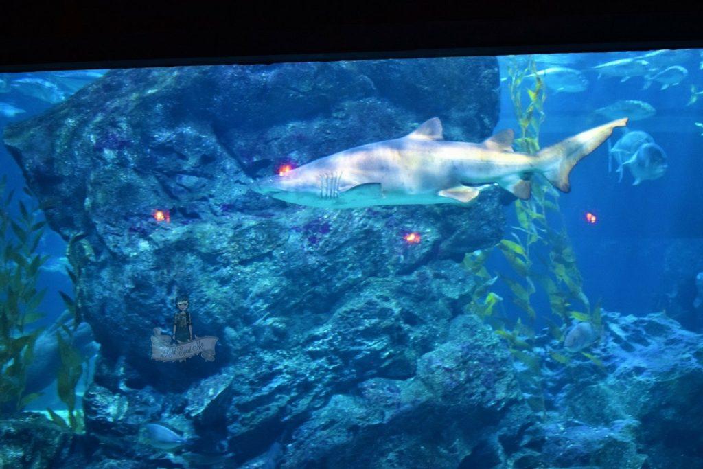 Sealife Ocean World Aquarium Shark Images