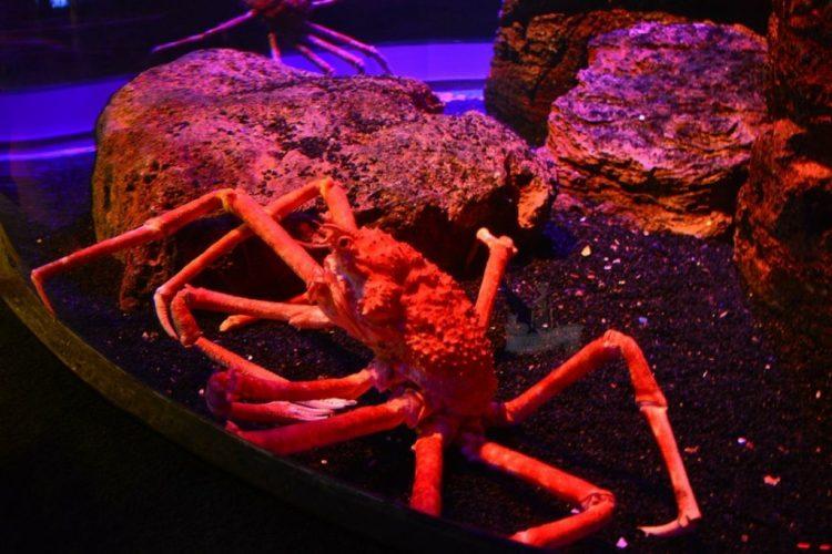 Crab - Siam Ocean World