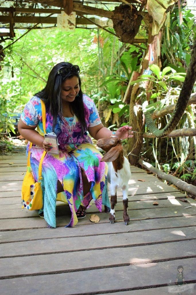 Giant Catfish Farm Ao Nang Krabi - The little lamb
