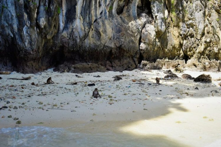 Monkey Beach Phi Phi Islands Thailand