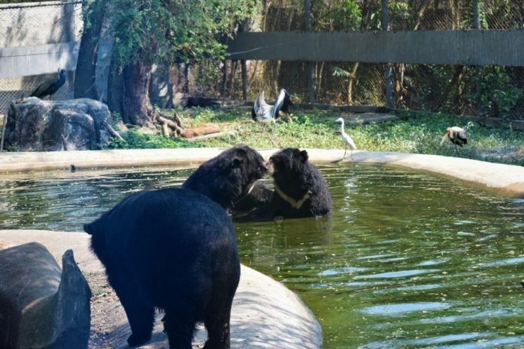 Bears in Safari World