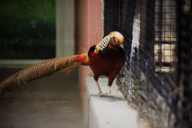 Malsi Deer Park pictures images - Dehradun Zoo Birds kohleyedme.com