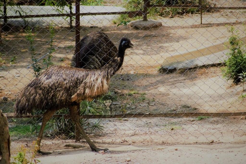 Malsi Deer Park entry fees ticket price - Dehradun Zoo Emu kohleyedme.com
