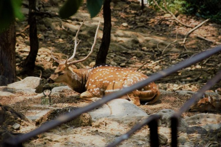 Malsi Deer Park - Dehradun Zoo Deer kohleyedme.com