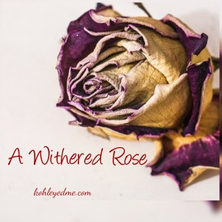 A Withered Rose #FridayReflections