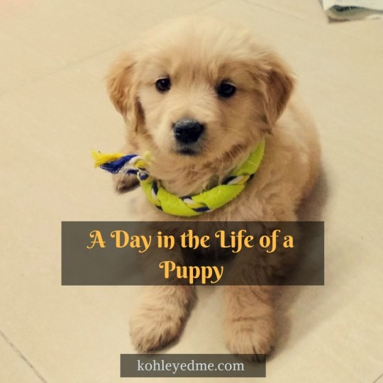 A Day in the Life of a Puppy kohleyedme.com