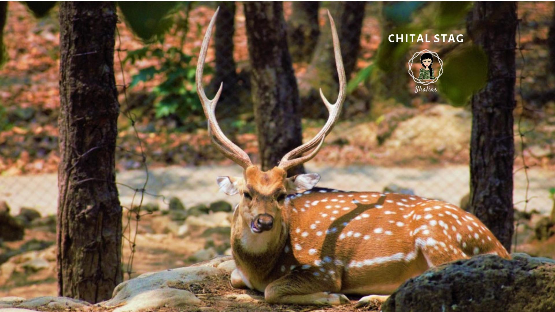 Chital deer fauna uttarakhand garhwal kohleyedme.com