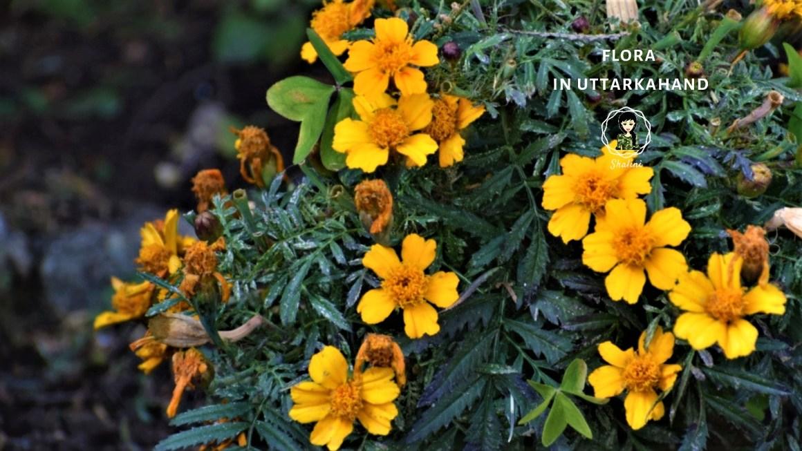 flora in uttarakhand