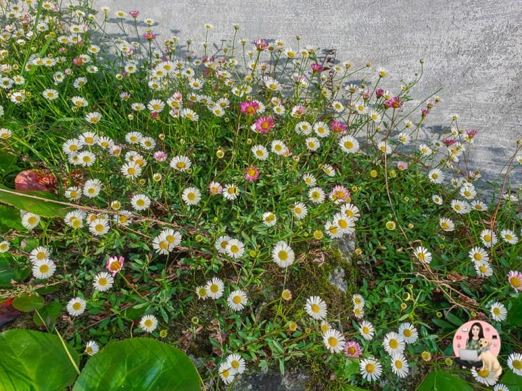 Flowers in Narayan Ashram