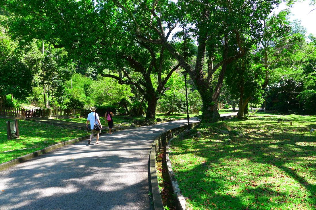 Category: 2015 檳城游記(6)植物園參古樹 - kohlier.weebly.com