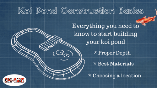 small resolution of building your koi pond learn the basics to get started