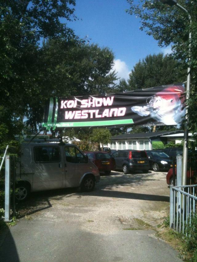 Koishow Westland