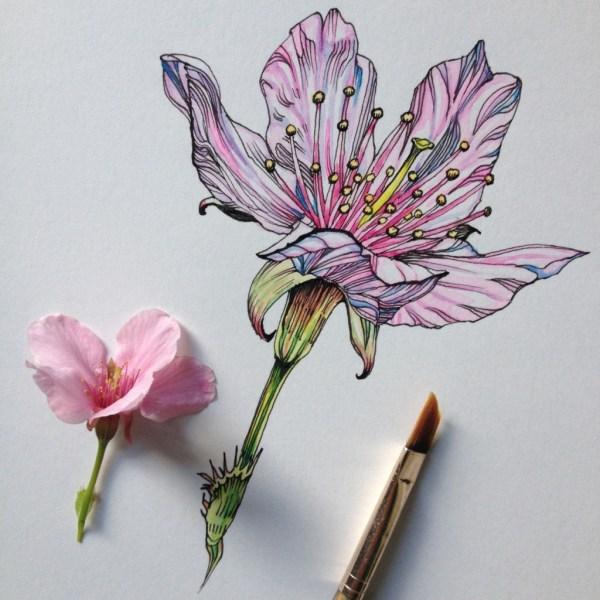 Flowers In Progress Beautiful Series Of Illustrations