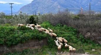 Έως τις 11 Απριλίου οι αιτήσεις για τη Βιολογική Κτηνοτροφία