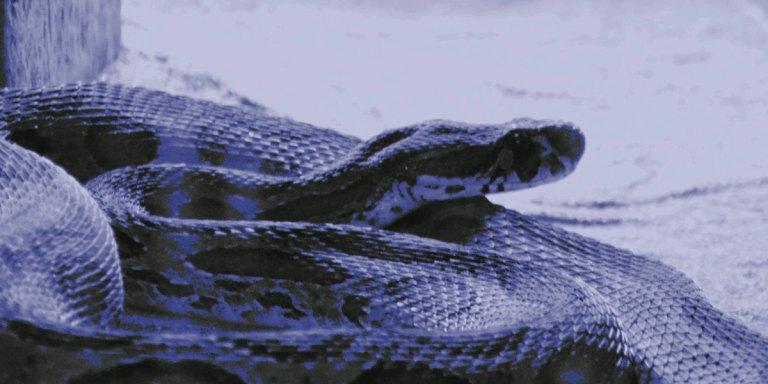 Snakes, gods, Gods, and bodies