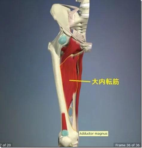 股関節痛み原因治療 大内転筋4.5