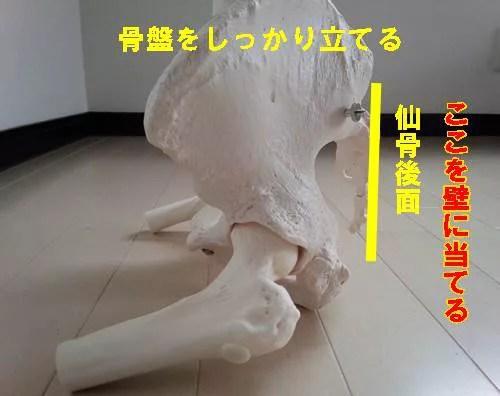 股関節内転筋のストレッチの正しい方法21