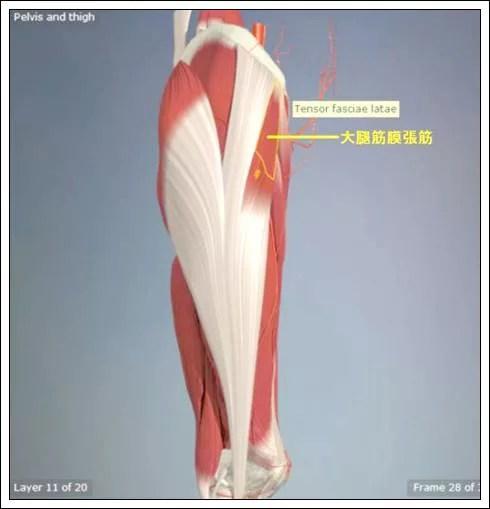 股関節痛み原因治療 大腿筋膜張筋4.7