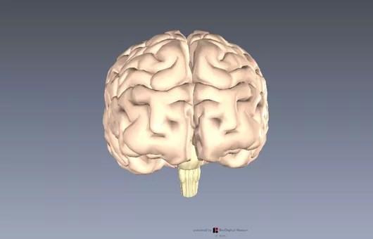 大脳辺縁系  扁桃体2