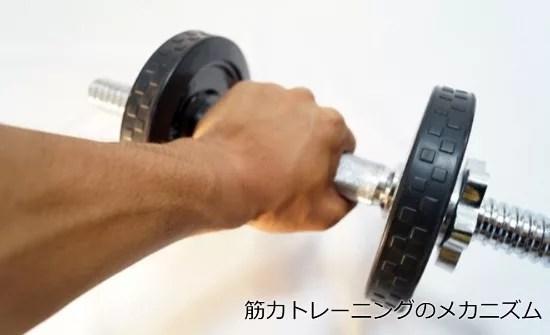 筋力トレーニングのメカニズム1
