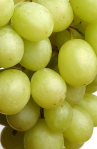 csiro_scienceimage_3368_white_grapes