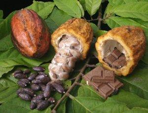 Mazorcas y habas de cacao