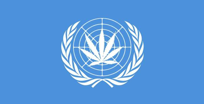 Latest! UN Urges Nigeria To Legalise The Use Of Cannabis 3