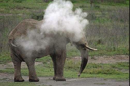Jaw-Dropping! Elephant Caught Smoking On Camera 2