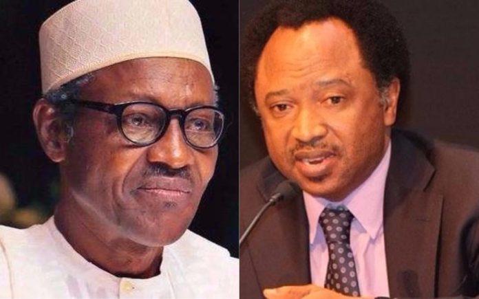 APC Will Crumble After Buhari Leaves - Shehu Sani 2