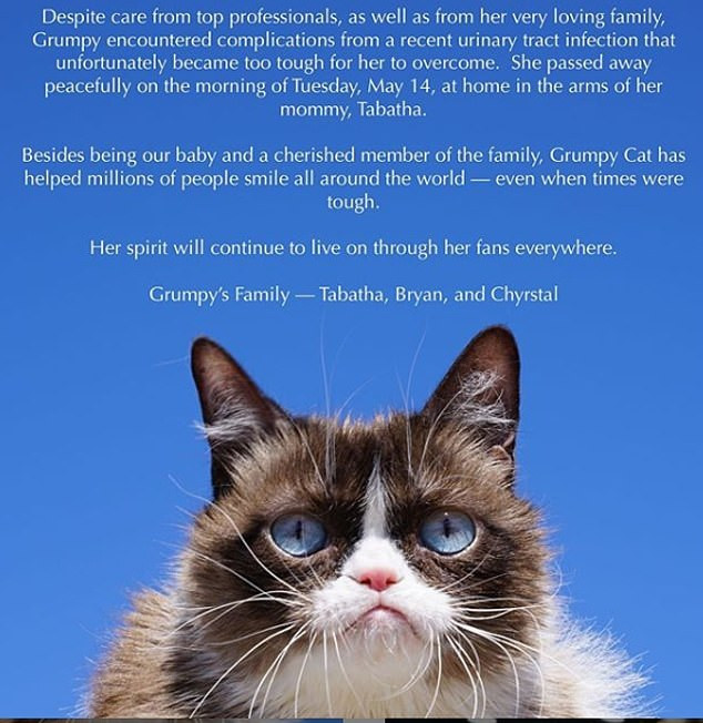 World Richest Cat With $100M Fortune, Grumpy Cat Is Dead 2