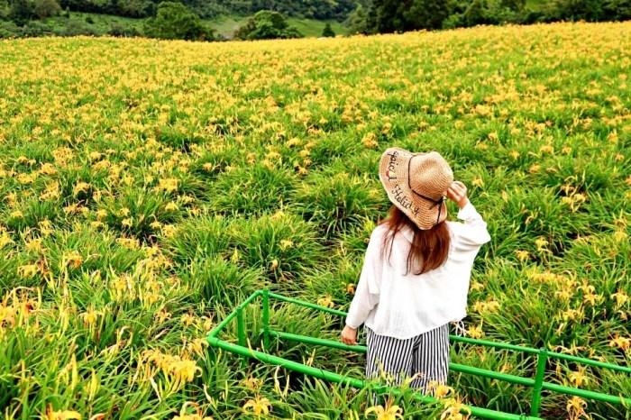 【花蓮景點】玉里赤科山、富里六十石山金針花海~每年都要衝一波的年度盛事!