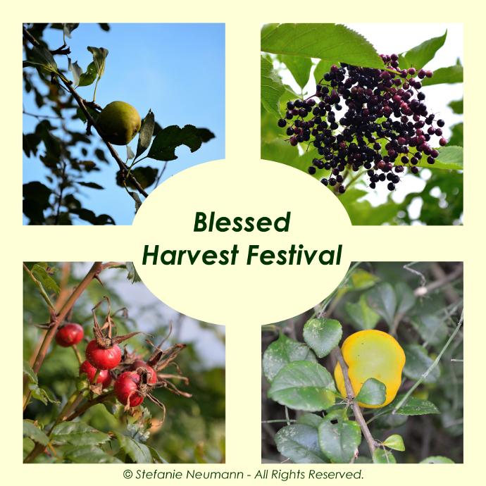 Blessed Harvest Festival 2016!