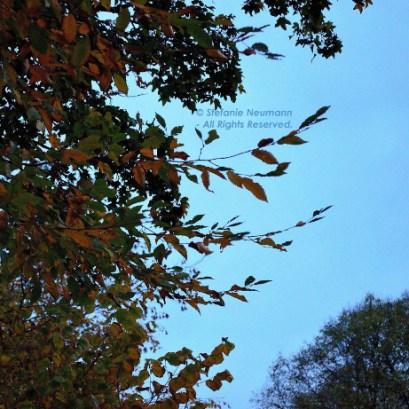 Evening Walk in Autumn 1 © Stefanie Neumann - All Rights Reserved.