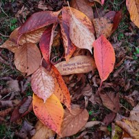 Evening Walk in Autumn 3/ Five hundred twenty five thousand six hundred minutes © Stefanie Neumann - All Rights Reserved; #KBFPhotography #KokopelliBeeFree