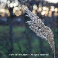 Flexibility 2 © Stefanie Neumann - All Rights Reserved.